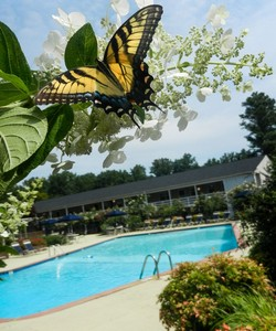 Arbors Apartments in West Winston-Salem NC Offers Two Swimming Pools and a Variety of Other Lavish Community Features
