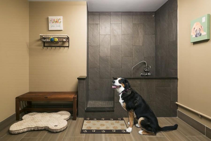 Pet wash station