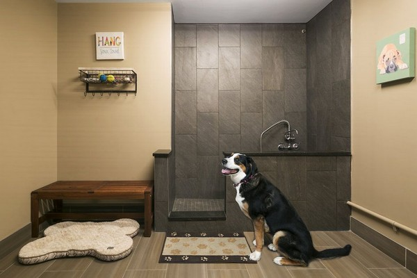 Pet wash station. Click to view the photo gallery.