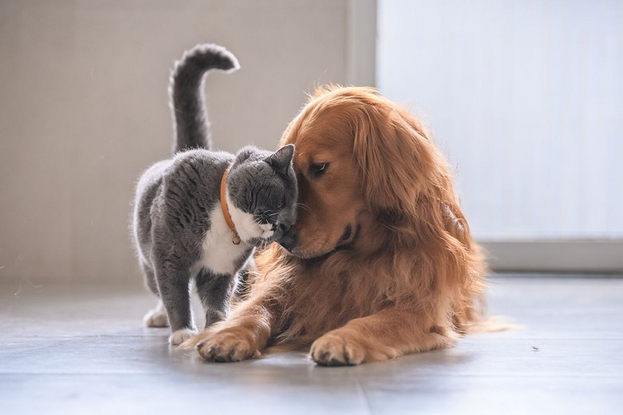Cat and dog rubbing heads