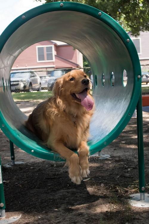 Dog on agility equipment in Bark Park