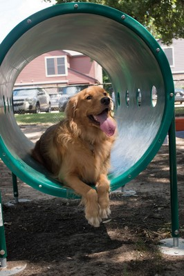 Dog on agility equipment in Bark Park. Click to view the photo gallery.