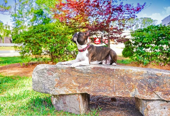 Dog on rock. Click to view the photo gallery.