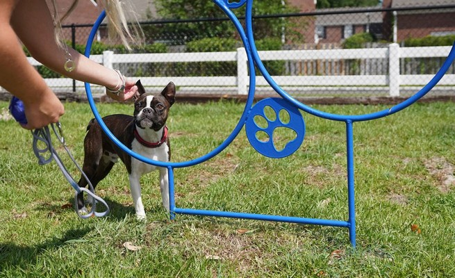 Dog using agility equipment in pet park. Click to view the photo gallery.
