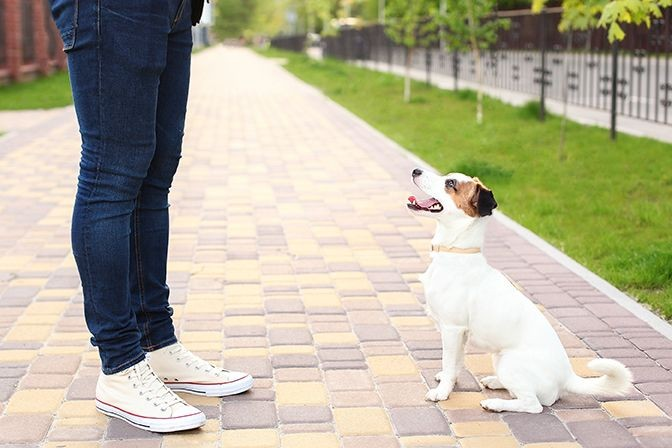 Person is training their small dog