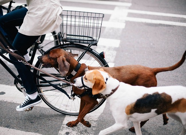 Dogs walking next to bike