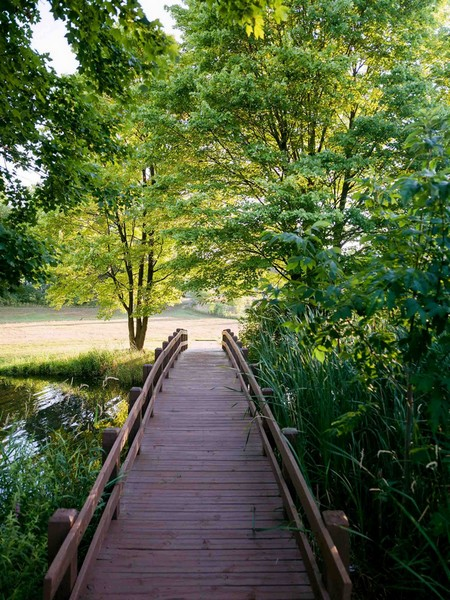 Small wooden bridge over water surrounded by greenery