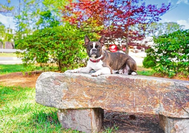 Dog laying on rock