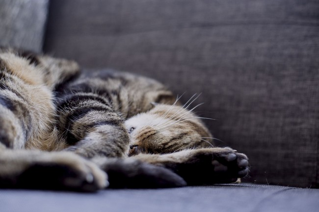 cat sleeping on a sofa