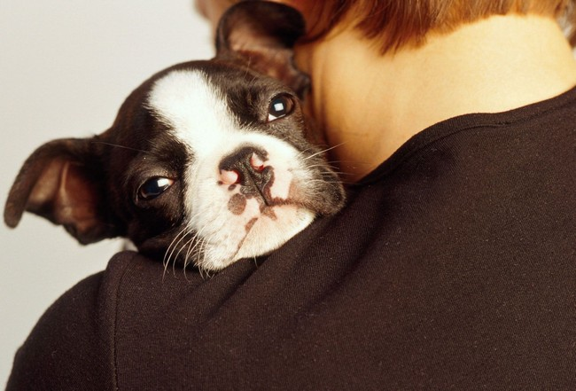 Puppy resting head on person's shoulder